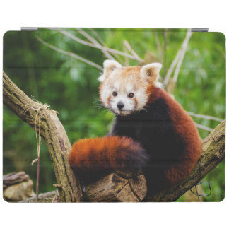 Cute Red Panda Bear iPad Cover