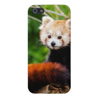 Cute Red Panda Bear iPhone 5/5S Case