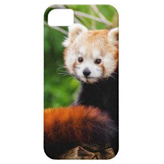 Cute Red Panda Bear iPhone 5 Case