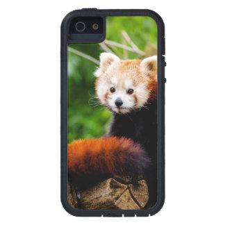Cute Red Panda Bear iPhone 5 Covers