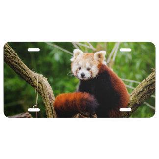 Cute Red Panda Bear License Plate