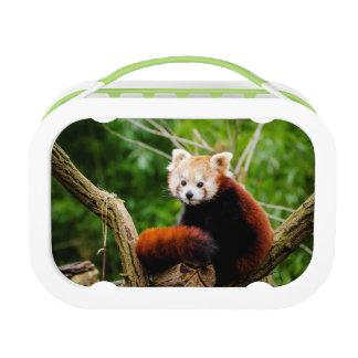 Cute Red Panda Bear Lunch Box