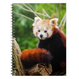 Cute Red Panda Bear Notebooks