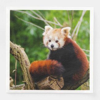 Cute Red Panda Bear Paper Napkins