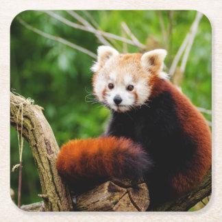 Cute Red Panda Bear Square Paper Coaster
