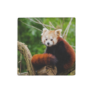 Cute Red Panda Bear Stone Magnets