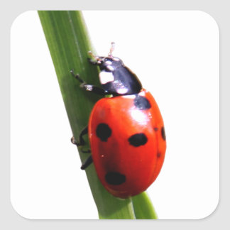 Cute Red Spotted Ladybug Square Sticker