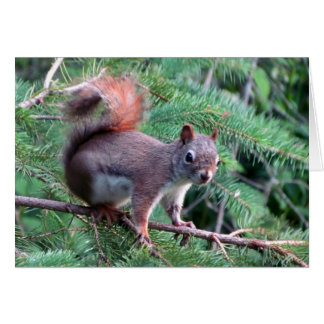 Cute Red Squirrel Card