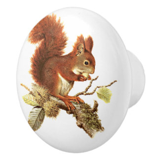 Cute Red Squirrel On Branch Ceramic Knob