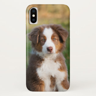 Cute Red Tri Australian Shepherd Dog Puppy Photo . Case-Mate iPhone Case