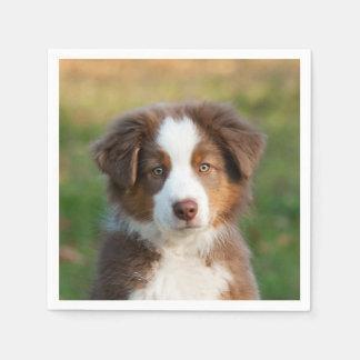 Cute Red Tri Australian Shepherd Dog Puppy Photo - Napkin