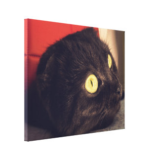 Cute Relaxing Scottish Fold Cat Canvas Print