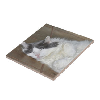 Cute resting Maine Coon cat Tile