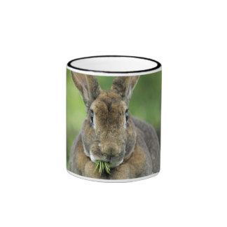 Cute Rex Rabbit Eating Fir Needles Ringer Mug
