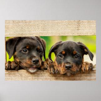 Cute rottweiler puppies peeking through fence poster