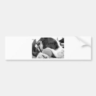 cute sad looking pitbull dog black white with ball bumper sticker