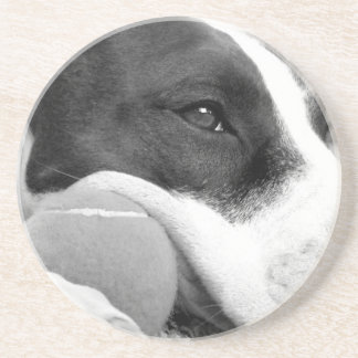 cute sad looking pitbull dog black white with ball drink coasters