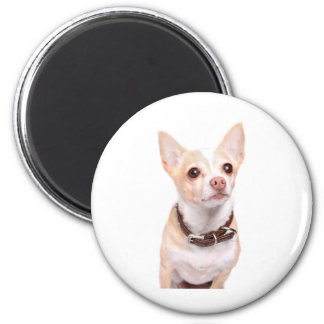 Cute sandy colored chihuahua dog 2 inch round magnet