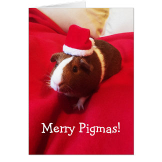 Cute Santa Guinea Pig Christmas Holiday Card