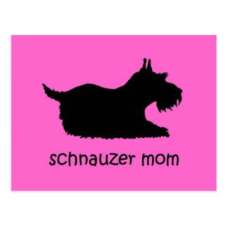 Cute Schnauzer Postcard