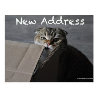 Cute scottish fold card cat funny moving address postcard