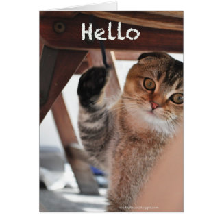 Cute scottish fold noodles cat hello card