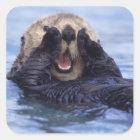 Cute Sea Otter | Alaska, USA Square Sticker