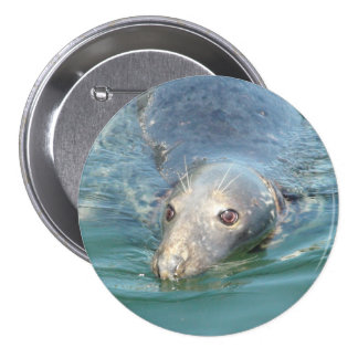 Cute Seal Photo in Cape Cod Chatham Pier Button
