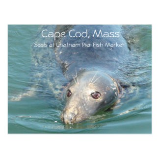 Cute Seal Swimming  Cape Cod, Chatham Fish Market Postcard