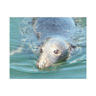 Cute Seal Swimming in Cape Cod Canvas Art