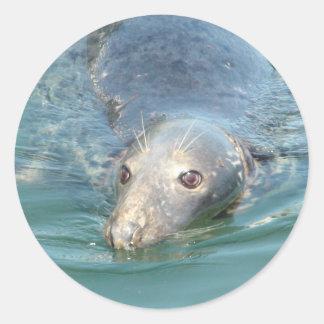 Cute Seal Swimming in Cape Cod Sticker
