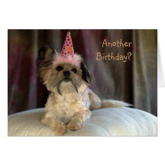 Cute Shaggy Dog Birthday Card