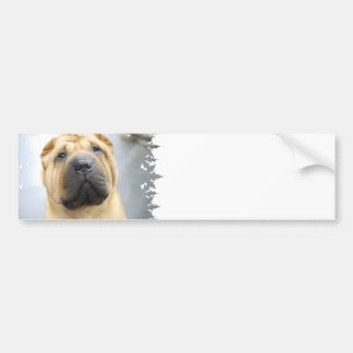 Cute Shar Pei Bumper Sticker