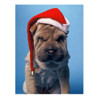 Cute Shar Pei puppy with Christmas hat Postcard