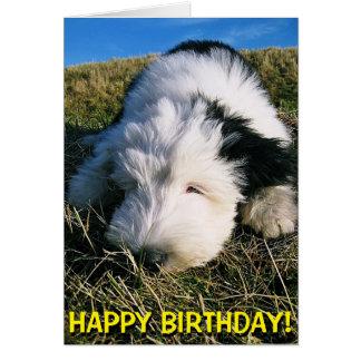 Cute sheepdog puppy birthday card