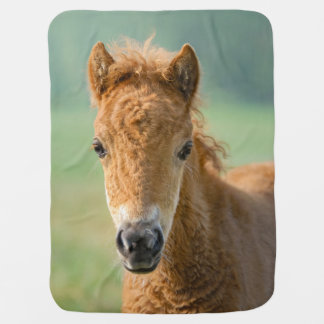 Cute Shetland Pony Foal Horse Head Frontal Photo * Baby Blanket