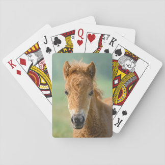 "Cute Shetland Pony Foal Horse Head Frontal Photo "" Playing Cards"