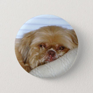 Cute Shitzu 2 Inch Round Button