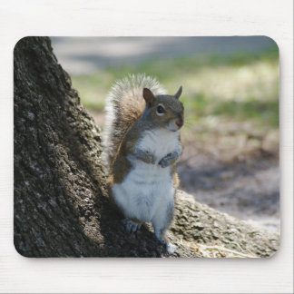 Cute, Shy Squirrel mousepad