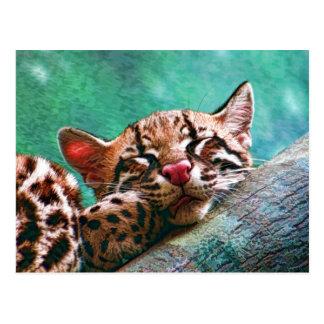 Cute Sleeping Baby Ocelot Kitten Postcard