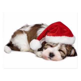 Cute Sleeping Havanese Puppy Dog Is Dreaming Postcard