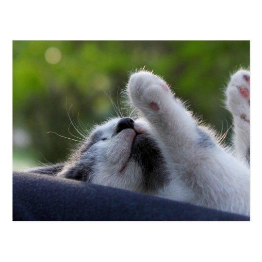 Cute Sleeping Kitten Postcard