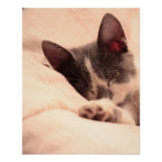 Cute Sleepy Cat Kitten Pet Peace Love Destiny Perfect Poster