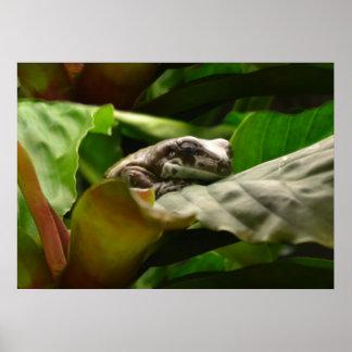 Cute Sleepy Frog Poster
