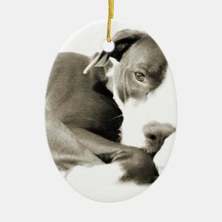 cute sleepy lazy pit bull dog ceramic oval ornament