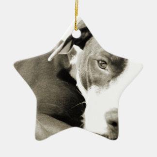 cute sleepy lazy pit bull dog ceramic star ornament