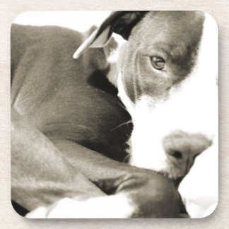 cute sleepy lazy pit bull dog drink coasters