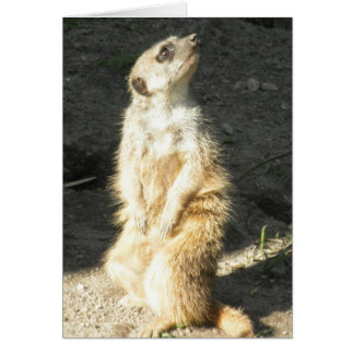 Cute Slender Tailed Meerkat Card
