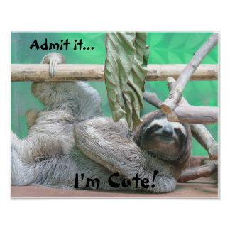 Cute Sloth! Poster