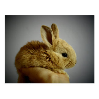 Cute small rabbit in hand postcard